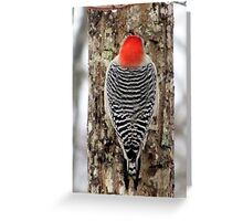 Woodpecker at Work Greeting Card