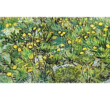 field of yellow flowers by vincent van gogh Photographic Print