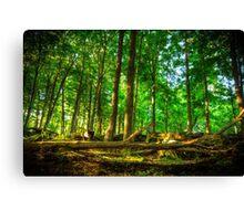 Dundas Valley Fallen Trees Canvas Print