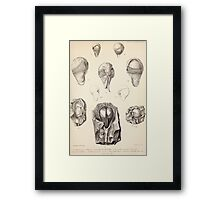 Proceedings of the Zoological Society of London 1848 - 1860 V5 Mollusca 005 Framed Print