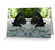 Pipevine Swallowtail Butterflies Greeting Card