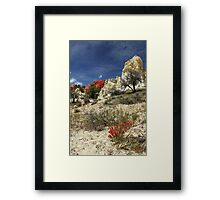 Red Flowers At Red Rock Canyon Framed Print