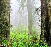 In The Mist by marilyn diaz