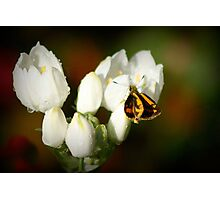 Teeny Weeny Butterfly Photographic Print