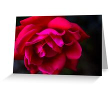 Drooping Rose in Darkness Greeting Card