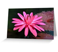 Large Pink Water Lily Greeting Card