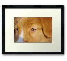 Toller Face Framed Print