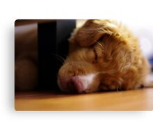 Nap Time Toller Canvas Print