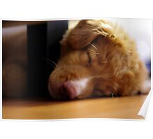 Nap Time Toller Poster