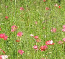 Poppies in Sunlight Sticker