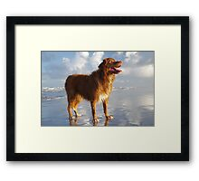 Happy Beach Toller Framed Print