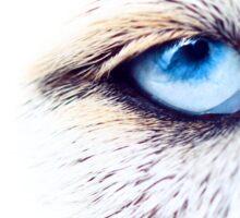 Eye of the beast Sticker