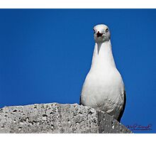Seagull in Wollongong (2) Photographic Print