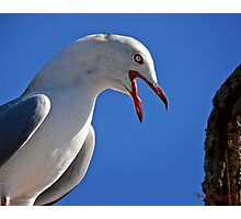 Seagull in Wollongong (4) Photographic Print