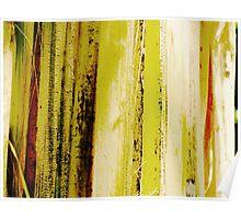Plantain Tree Poster