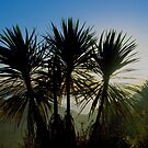 First light..........Cabbage Tree trio........! by Roy  Massicks