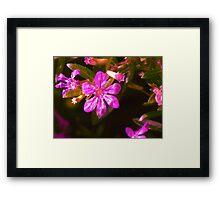 Pub Flower Framed Print