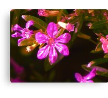 Pub Flower Canvas Print