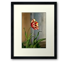 Red And Yellow Parrot Tulip Framed Print