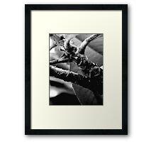 Purflore Framed Print