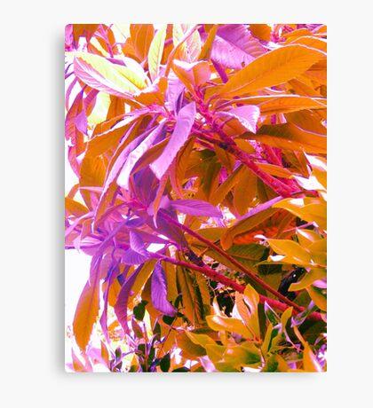 Floss Tree Canvas Print