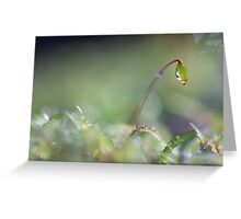 Sparkling moss in the forest Greeting Card