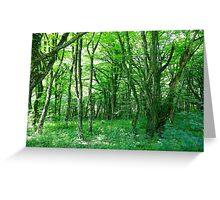 Plitvice Lakes National Park 05 Greeting Card