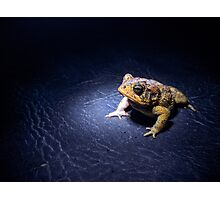 Southern Toad Photographic Print