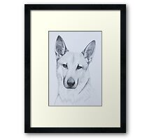 Chinook Dog Framed Print