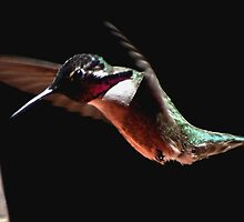 HUMMINGBIRD MALE COSTA'S IN FLIGHT by JAYMILO