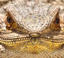 Bearded Dragon Close Up Sticker