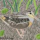 American Woodcock by DebiCady