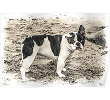 French Bulldog on Beach Poster