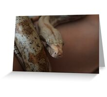 Cryptarch-Boa Constrictor Portrait Greeting Card