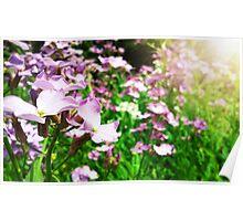 Wildflowers.  Poster