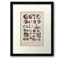 Proceedings of the Zoological Society of London 1848 - 1860 V5 Mollusca 014 Framed Print