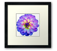 Purple Blooming Flower Framed Print