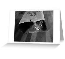 Cleo in a Bag Greeting Card