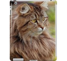 Maine Coon Cat Artwork iPad Case/Skin