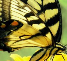 Eastern Tiger Swallowtail Butterfly Sticker