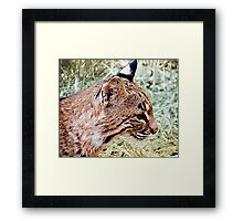 Bobcat With Stealthy Eye Framed Print
