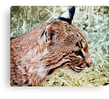 Bobcat With Stealthy Eye Canvas Print