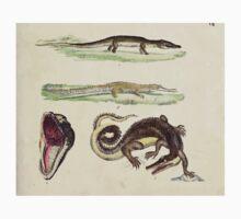 Naturgeschichte in Bildern mit erläuterndem Text E Strack 1820 Lief 3 Reptiles 007 One Piece - Short Sleeve