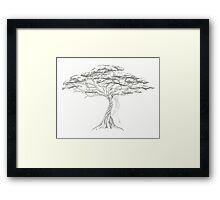 Acacia Shadow , black and white beautiful zen tree  Framed Print