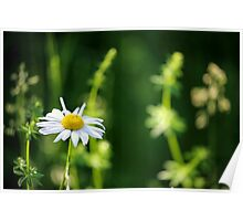 Happy little flower Poster