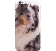 Shetland Sheepdog Portrait iPhone Case/Skin