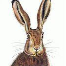 Hare Colour by Kerina Strevens