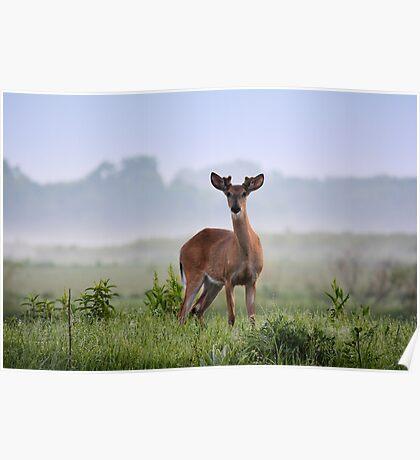 Misty Buck Poster
