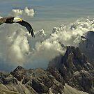 Bird of Prey by David Dehner