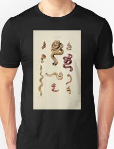 Thesaurus conchyliorum Monographs of genera of shells George Brettingham Sowerby 1887 V1-V5 250 T-Shirt